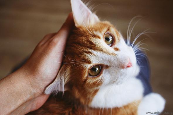 рыжий кот / ginger cat