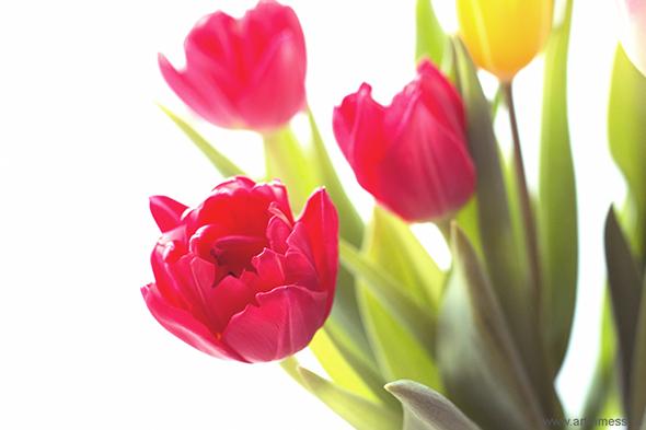 тюльпаны / tulips