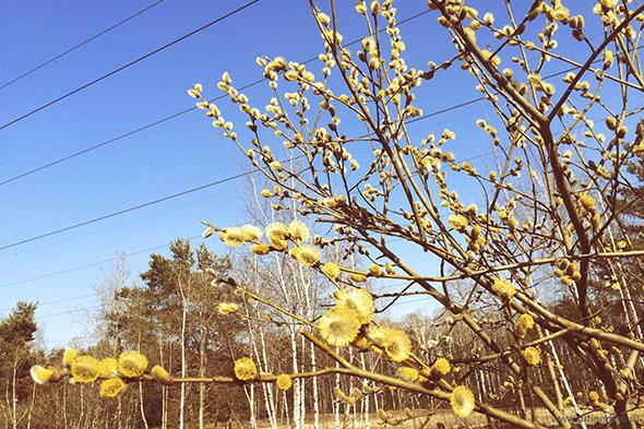 Кадры апреля / Snapshots of April