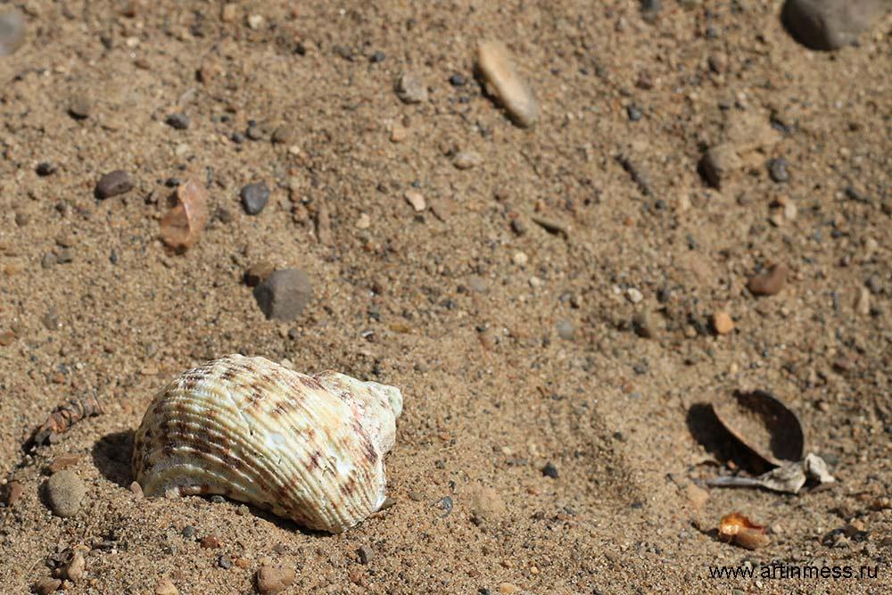 Ракушка пляж лето море shell sea beach summmer